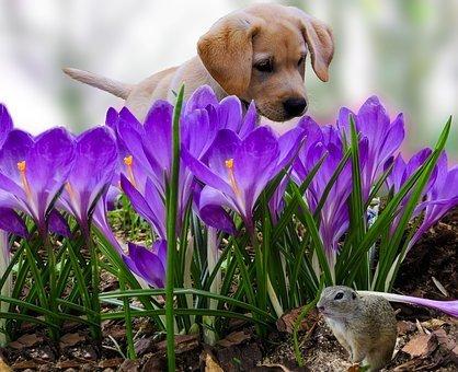 spring, dogs, cats, allergies, pollen, Fairfax Animal Hospital